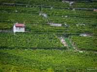 23092013_lavaux_vignes_vincentbailly-10