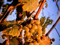 23092013_lavaux_vignes_vincentbailly-12