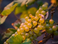 23092013_lavaux_vignes_vincentbailly-16