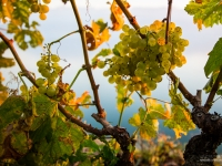 23092013_lavaux_vignes_vincentbailly-18