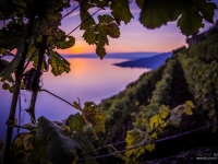 23092013_lavaux_vignes_vincentbailly-19
