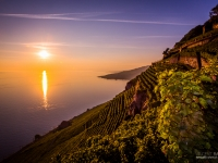 23092013_lavaux_vignes_vincentbailly-4
