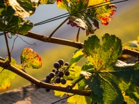 23092013_lavaux_vignes_vincentbailly-8