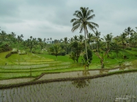 indonesie_2011_paysages-10