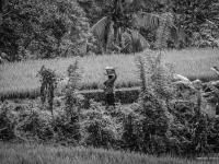 indonesie_2011_population-14