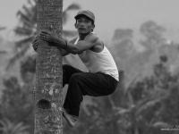 indonesie_2011_population-16