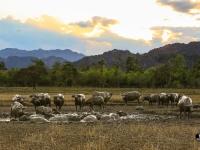 laos_2012_landscapes-59