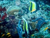 maldives_decembre2009-11