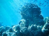 maldives_decembre2009-12