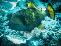 maldives_decembre2009-18