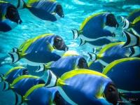 maldives_decembre2009-20