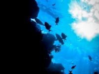 maldives_decembre2009-7
