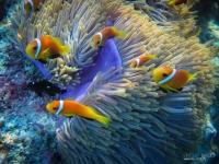 maldives_decembre2009-9