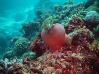 maldives_decembre2010-12
