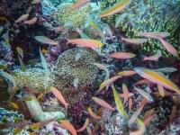 maldives_decembre2010-16