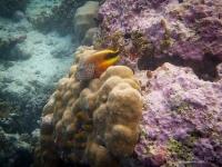 maldives_decembre2010-18