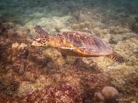 maldives_decembre2010-21
