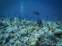 maldives_decembre2010-24