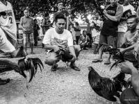 philippines2013_combats_de_coq-04