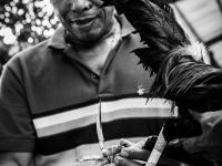 philippines2013_combats_de_coq-08