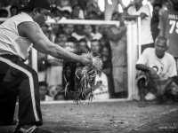philippines2013_combats_de_coq-50