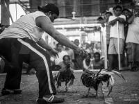 philippines2013_combats_de_coq-53
