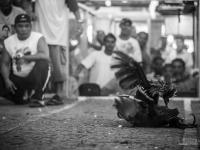 philippines2013_combats_de_coq-54