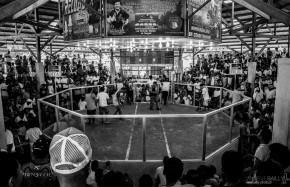 Philippines / Combats de coqs / 2013